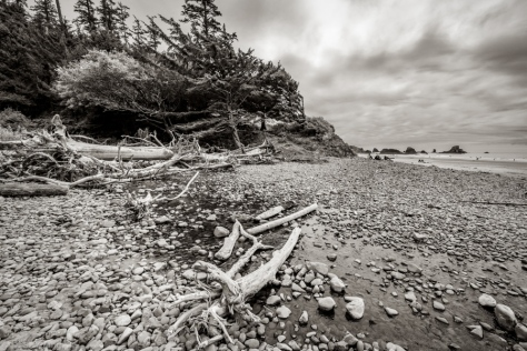 Indian Beach Driftwood and Rock Composition 1